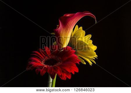 Red and Yellow Daisy's and Calla Lily