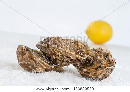 Fresh Shucked Oysters ready to be eaten
