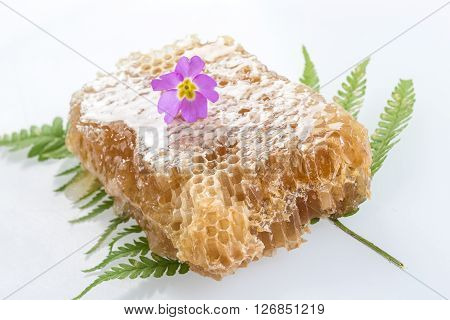 Honeycomb close up   on white backgrounnd with flowers