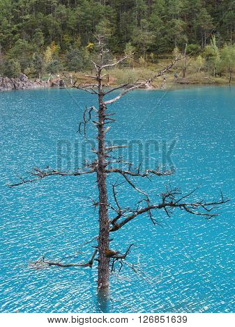 Dead tree Blue Moon Valley in Jade Dragon Snow Mountain Lijiang Yunnan China