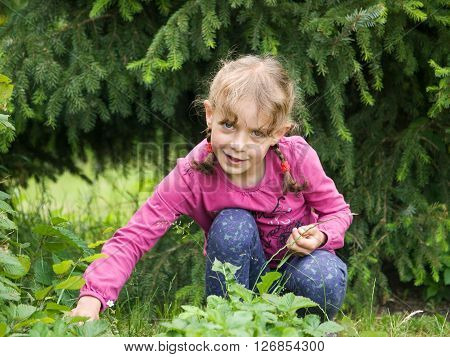 Young girl picking strawberries in the garden