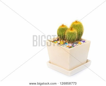 Cactus On White.