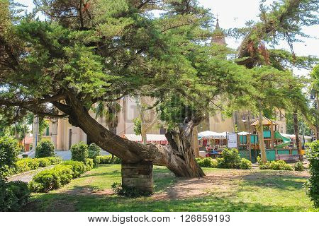 Vada Italy - June 29 2015: Old broken tree in the city park of small maritime town Vada on the coast of the Ligurian Sea. Province Livorno Tuscany region of Italy
