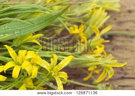 blurred background of yellow flowers with leaves on the wooden background. Toned foto