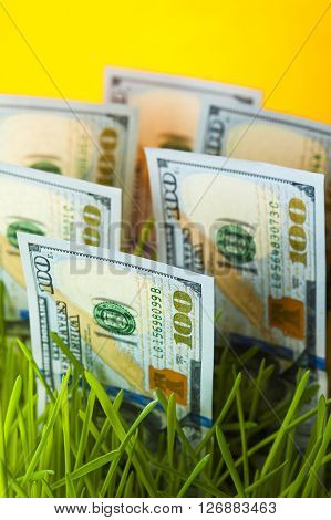 One hundred dollar bills in green grass. Money growth. Financial concept.