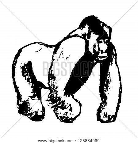 Graphic image of a male gorilla on a white background. Abstract pattern of black lines vector. The image of the big primate