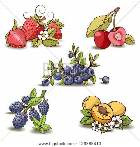 Sweet berries isolated. Vector collection for your design. Cute set of berries. Strawberries, cherries, blueberry or bilberry, blackberry, apricot. It can be used in labels, stickers, packaging.