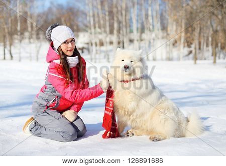 Woman Owner And White Samoyed Dog Gives Paw In Winter Day