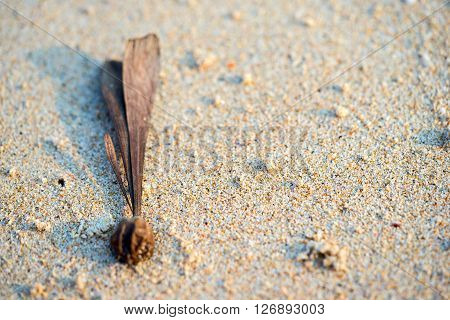 sand background with plant seed similar to an exclamation mark and empty copy space for your text