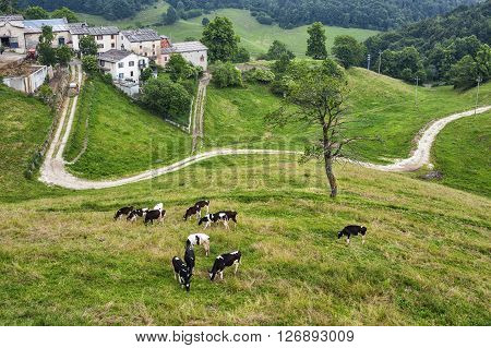 Landscape in Lessinia (Veneto Italy) at summer with cows at pasture