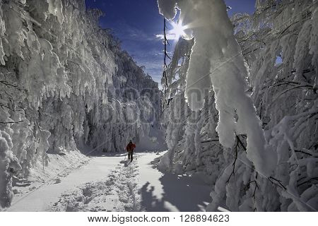 Italy, Tuscany, National Park Of The Casentino Forests, Mount Falterona, Campigna