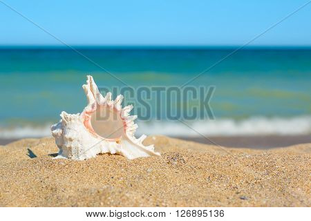 Shell In Sand On The Sea Side