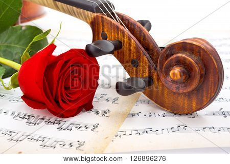Close View Of Violin Scroll And Red Rose