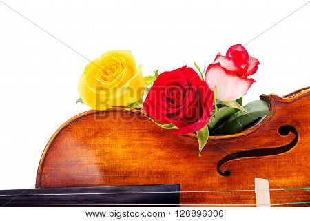 Flowers On Violin