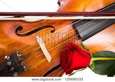 Red Rose On Violin