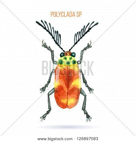Colorful hand painted watercolor bug beetle isolated on white background. Bright insect named Polyclada Sp. Brown yellow green and grey graphic design element. Raster illustration.