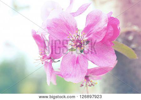 Beautiful spring blossom, close up. Retro style