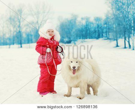 Child And White Samoyed Dog On Leash Walking Winter
