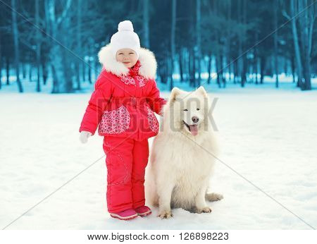 Little Child And White Samoyed Dog Walking In Winter Day