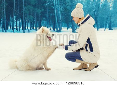Woman Owner Teaches White Samoyed Dog In Winter Day