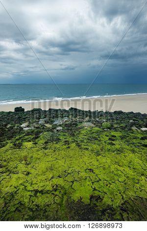 Seaview With Mossy Rocks In Vlissingen, Netherlands