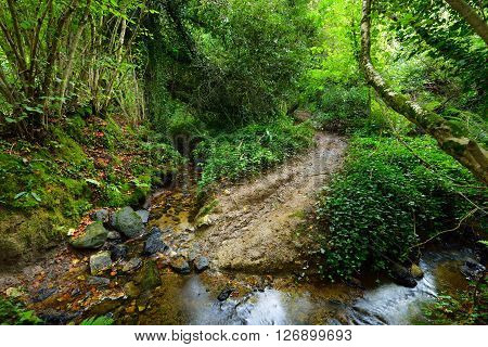 Small Forest Stream In A Green Hazel And Oak Forest In Brittany, France