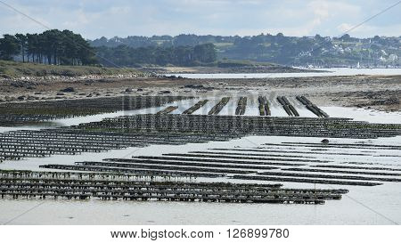 Mussel growing nets in Lilia Brittany France