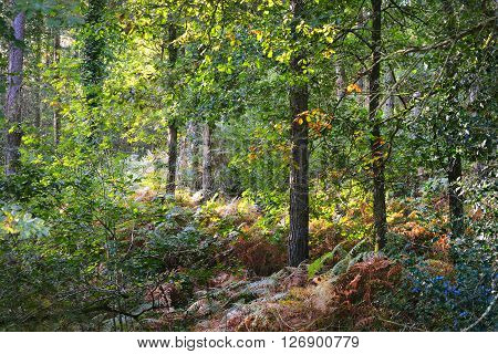 Colourful Green Vegetation In A Deciduous Oak Forest