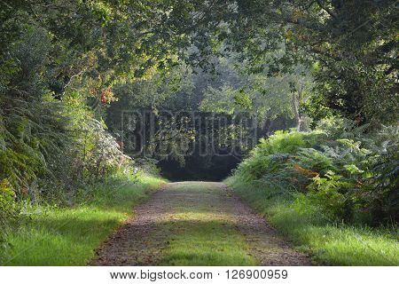 Mysterious Natural Tree Arch Walkway In A Green Deciduous Forest