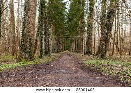 Spring scenery of rural lane in the deciduous forest
