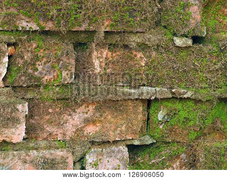 Moss on old brick wall. Lots of moss