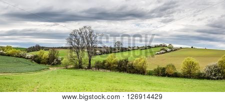 Spring Landscape With Green Fields And Flowering Bushes