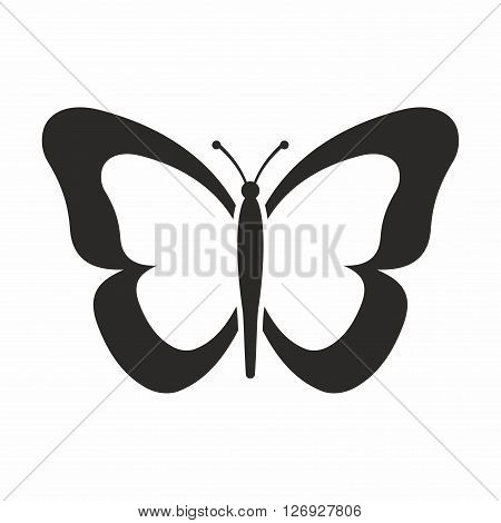 Butterfly is part of the class of insects in the order Lepidoptera, along with the moths.