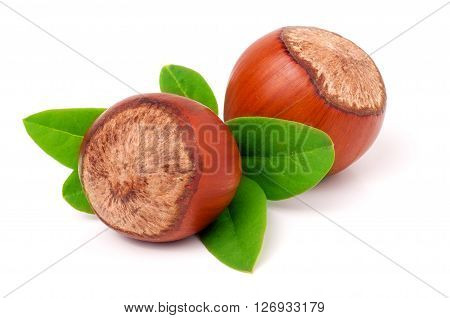 Two hazelnuts with leaves isolated on white background close-up macro.