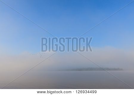 Swan wedge over Volga river. Misty dawn early morning nature landscape view in Russian countryside.