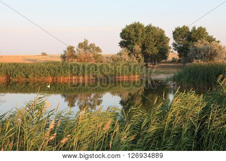 Baskunchak Bogdo lake oasis. The reeds and grasslands landscape. Evening