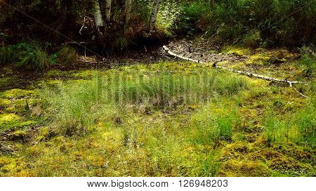A fallen tree lies in the swamp.