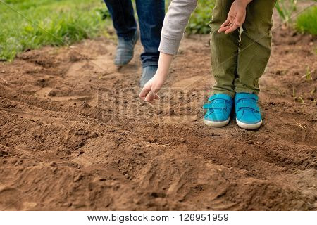 Little Boy Sowing Vegetables In The Home Garden
