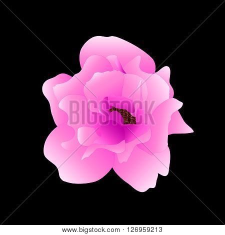 Rose Flower Isolated On Black Background. Vector Illustration