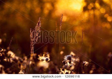 Plant In Sunset Light
