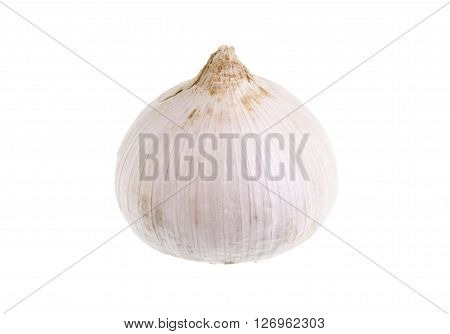 Fresh Single Clove Garlic also known as pearl garlic or solo garlic is a variety of Allium ampeloprasum native from southern Europe to western Asia