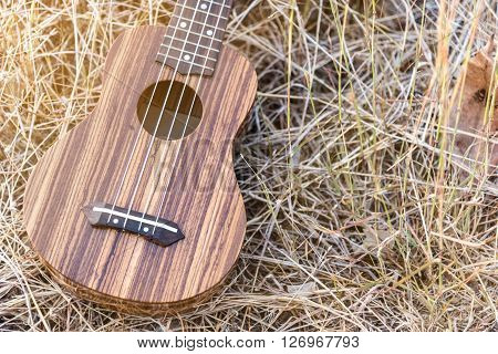 still life with ukulele in vintage style on brown grass background