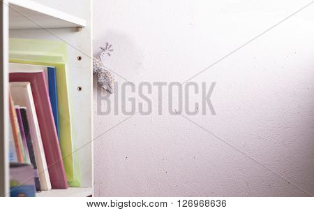 gecko on the wall ,bugbear , Lizard fish
