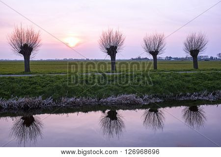 Cropped willows in a typical dutch landscape at sunset in the Netherlands