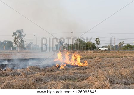 Field On Fire, Burning Dry Grass Near The Highway