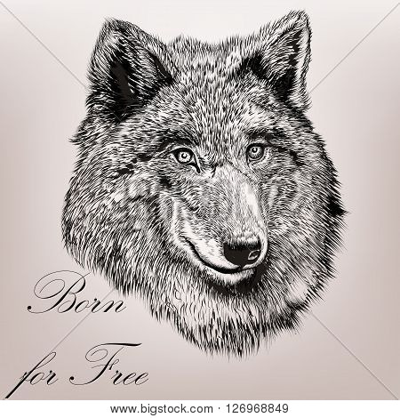 Beautiful high detailed hand draw wolf realistic vector in engraved style born for free