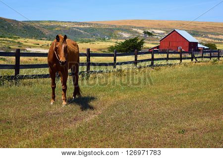 Horse taken at a rustic style ranch with rural grasslands