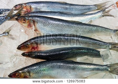 Fresh herring for sale at a fish market