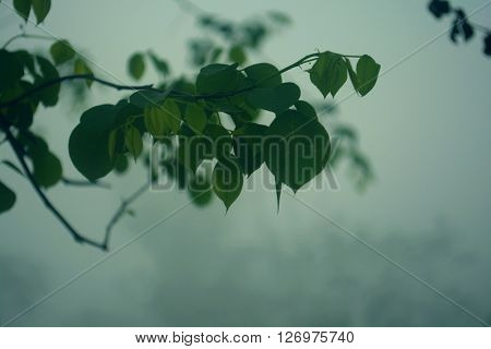 This is a photo of some leaves of a tree covered with the dense fogs in a winter morning. The green eaves and the moist creates a wonderful environment