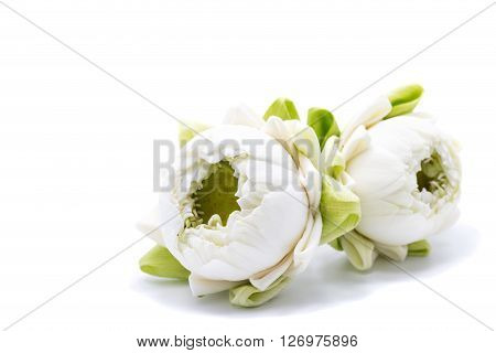 two white lotus flower isolated on white background